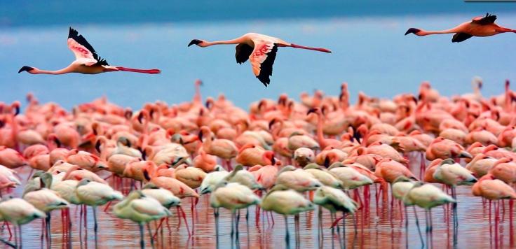 Flamingos-Lake-Nakuru-Kenya
